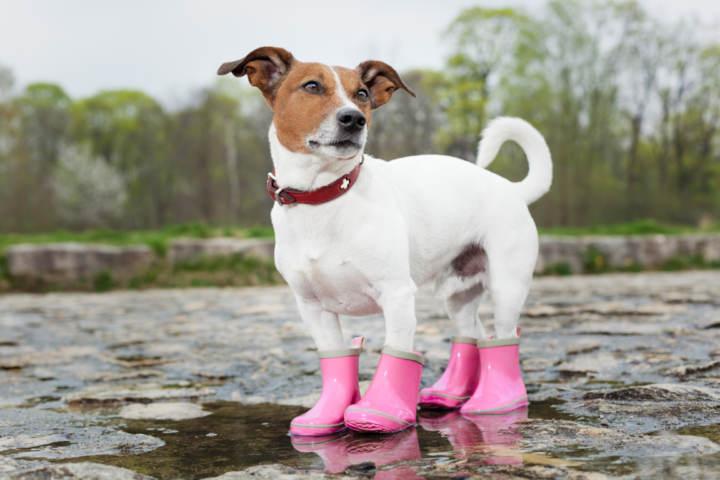 botas para perros con heridas